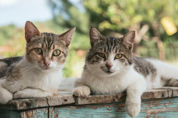 Varför ska man ha en kattförsäkring?