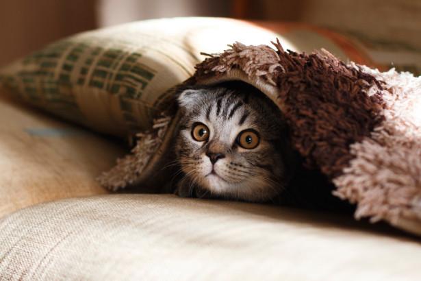 Hela guiden för dig som ska skaffa katt 2019