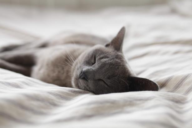 Hur fungerar en dolda fel-försäkring för katter?