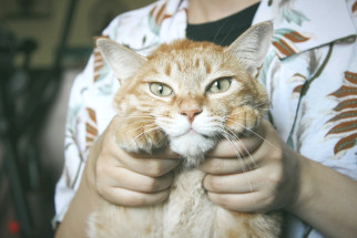 Överlåta en kattförsäkring
