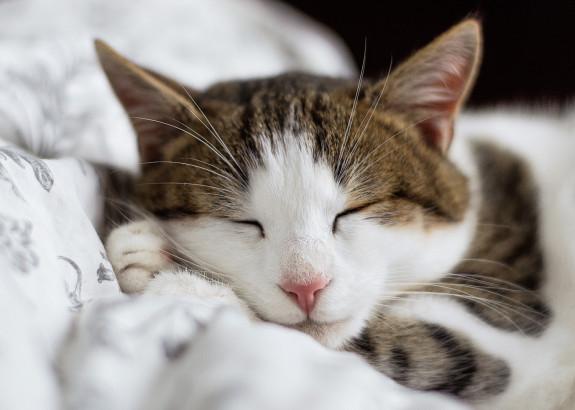 Vad kostar en kattförsäkring